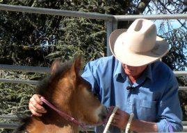 Wayne Anderson foal handling